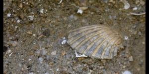 Fossili marini
